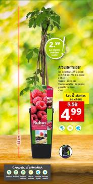 2 Arbustes fruitiers au choix