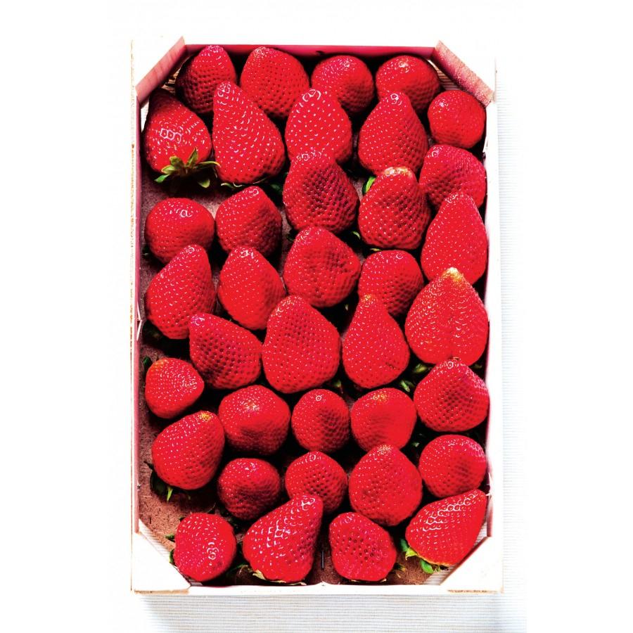 Plateau de 1kg de fraises - Origine Espagne