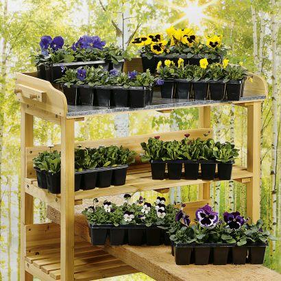 Lot de 10 plantes fleuries Garrden Feelings - coloris et variétés assortis