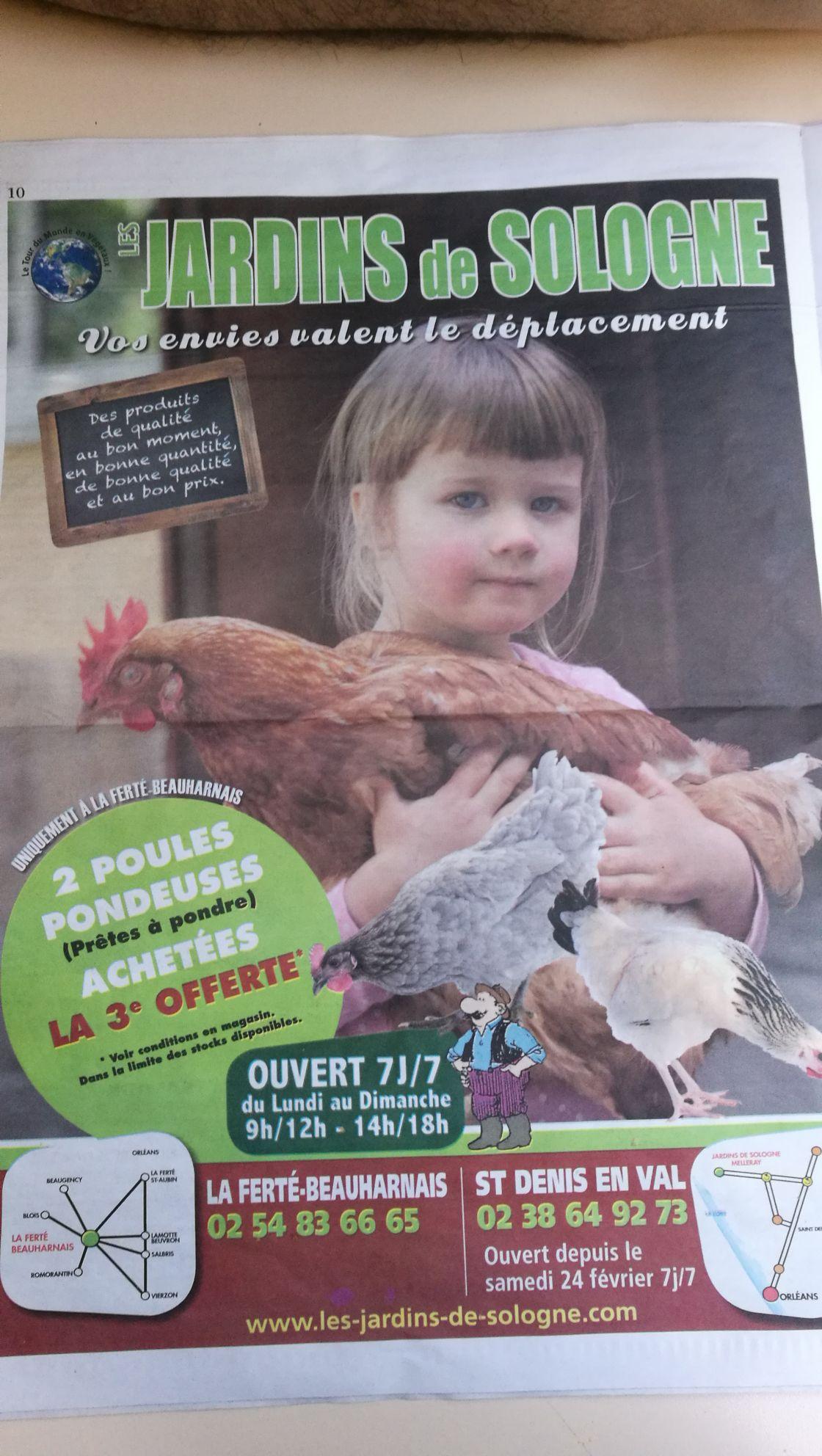 2 poules pondeuses achetées = la 3ème offerte - Ferte-Beauharnais (41)