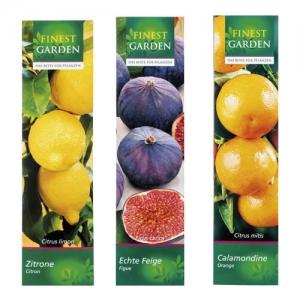 Plante méditerranéenne: figues, calamondins ou citrons (au choix) - 30/35 cm