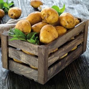 Filet de 10 kg de pommes de terre de consommation