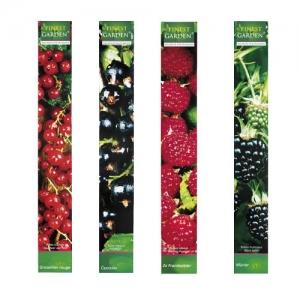 Arbustes fruitiers hauteur 60/65 cm