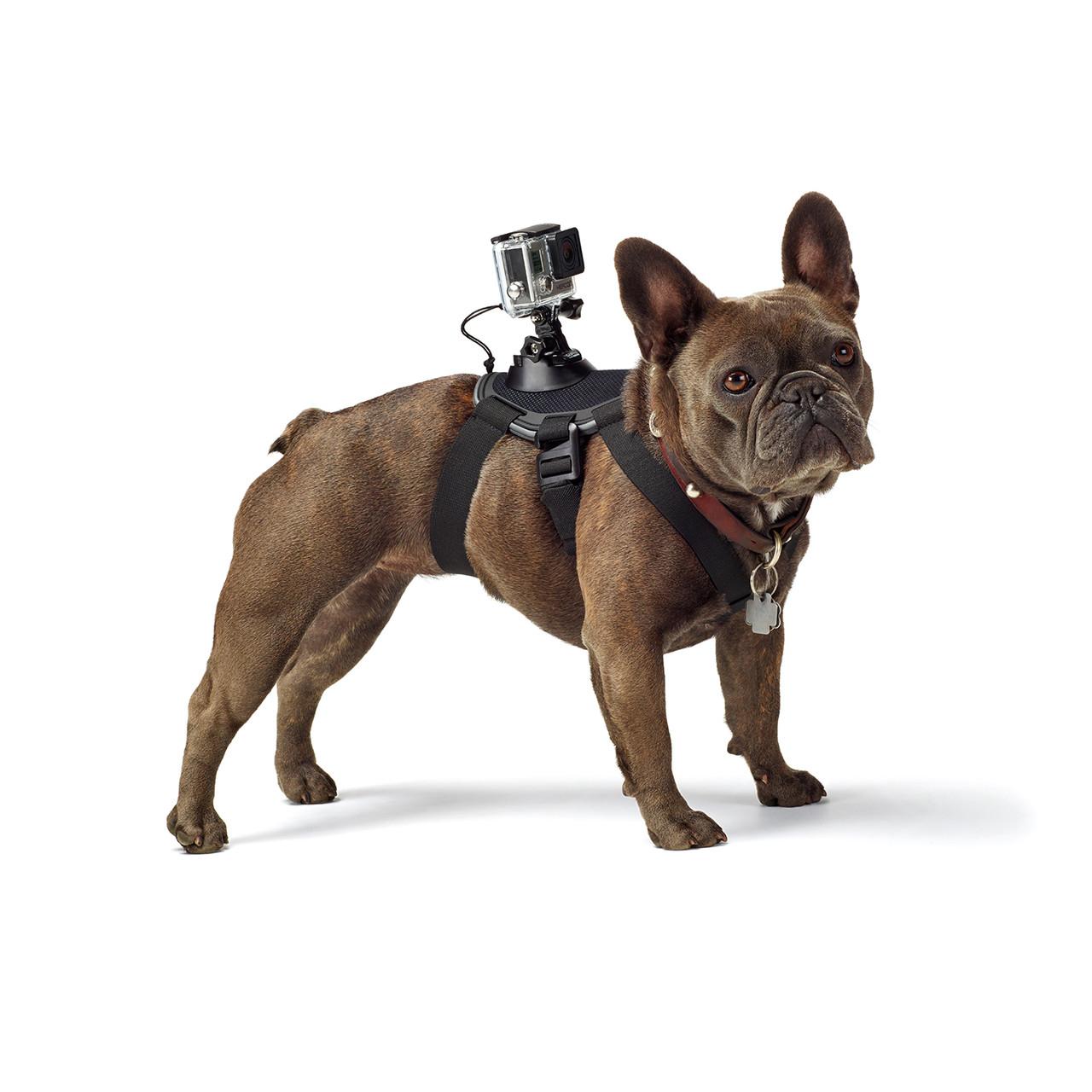Harnais pour chien GoPro Fetch