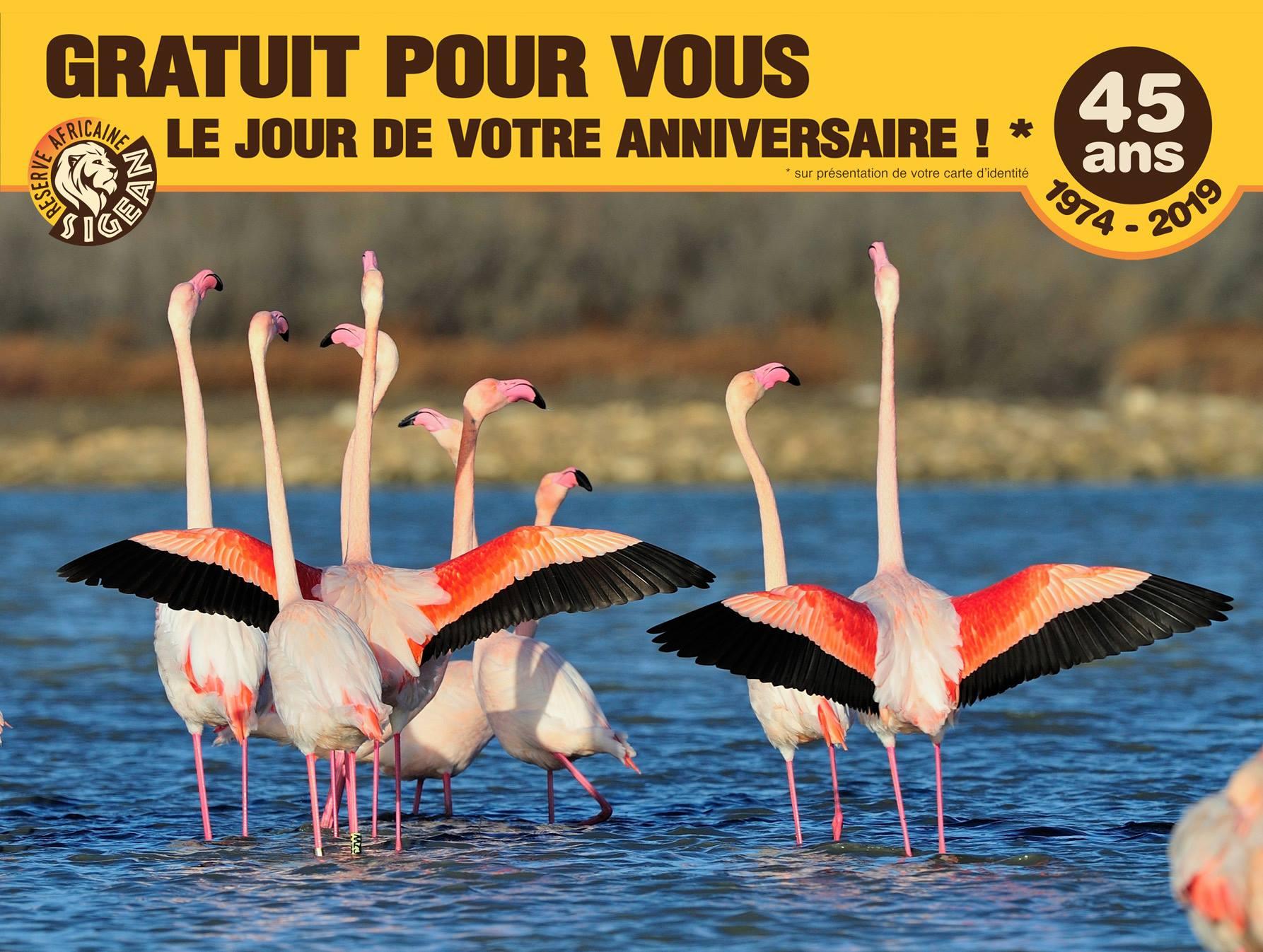 Entrée offerte le jour de votre anniversaire à la Réserve africaine de Sigean (11)