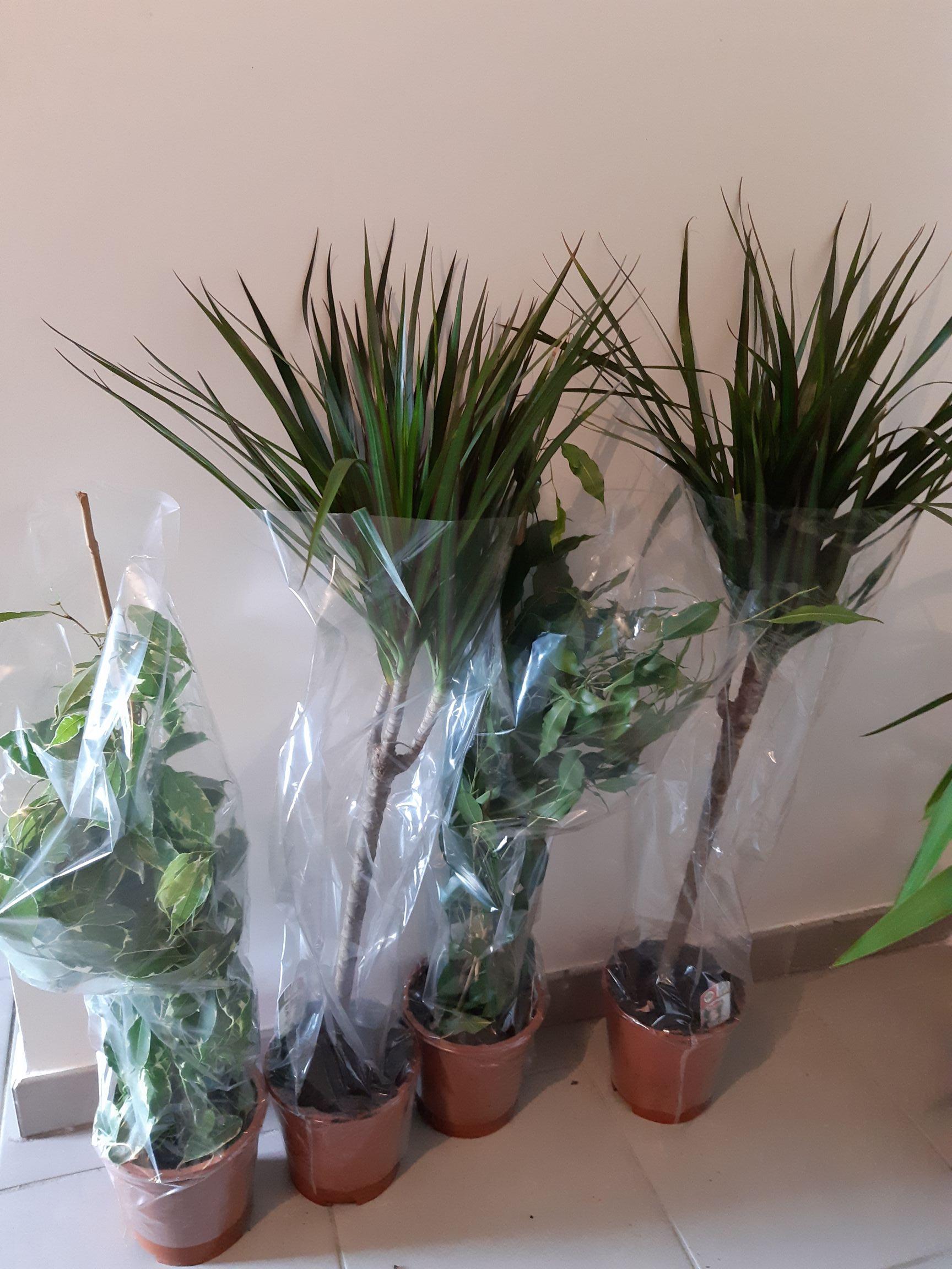 Plantes vertes - Différentes variétés - National