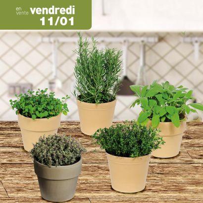 plante aromatique en pot diff rentes vari t s 14 cm. Black Bedroom Furniture Sets. Home Design Ideas