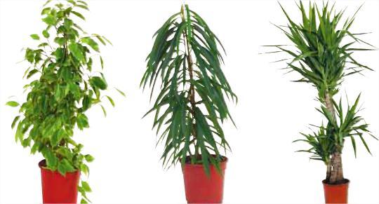 Différentes variétés de plantes vertes (130-140 cm)
