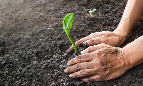 Distribution gratuite de terreau pour plantations - Poissy (78)