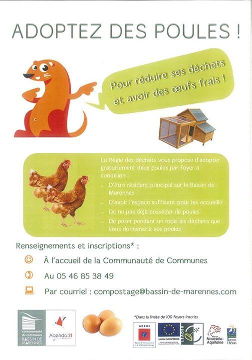 2 poules pondeuses gratuites pour réduire les déchets - Communauté de Communes du Bassin de Marennes (17)