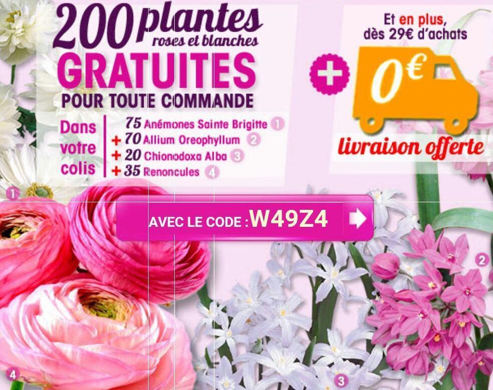 200 plantes roses et blanches offertes pour tout commande