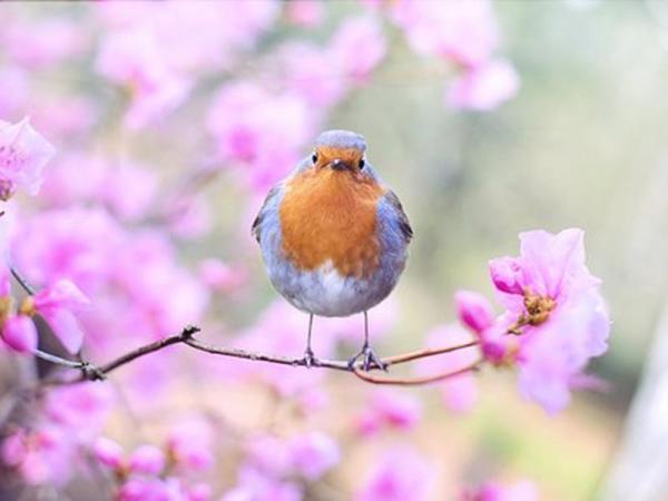 Atelier de (re)découverte des oiseaux du Jardin des Plantes - Caen (14)