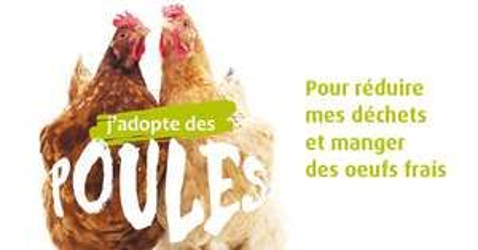 Adoptez deux poules gratuitement pour la réduction des déchets - Mulhouse Alsace Agglomération (m2A)