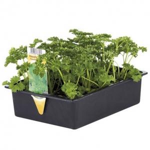 Clayette de 12 plants de légumes (poireaux, choux-fleurs, brocolis, choux-raves ou céleris au choix)