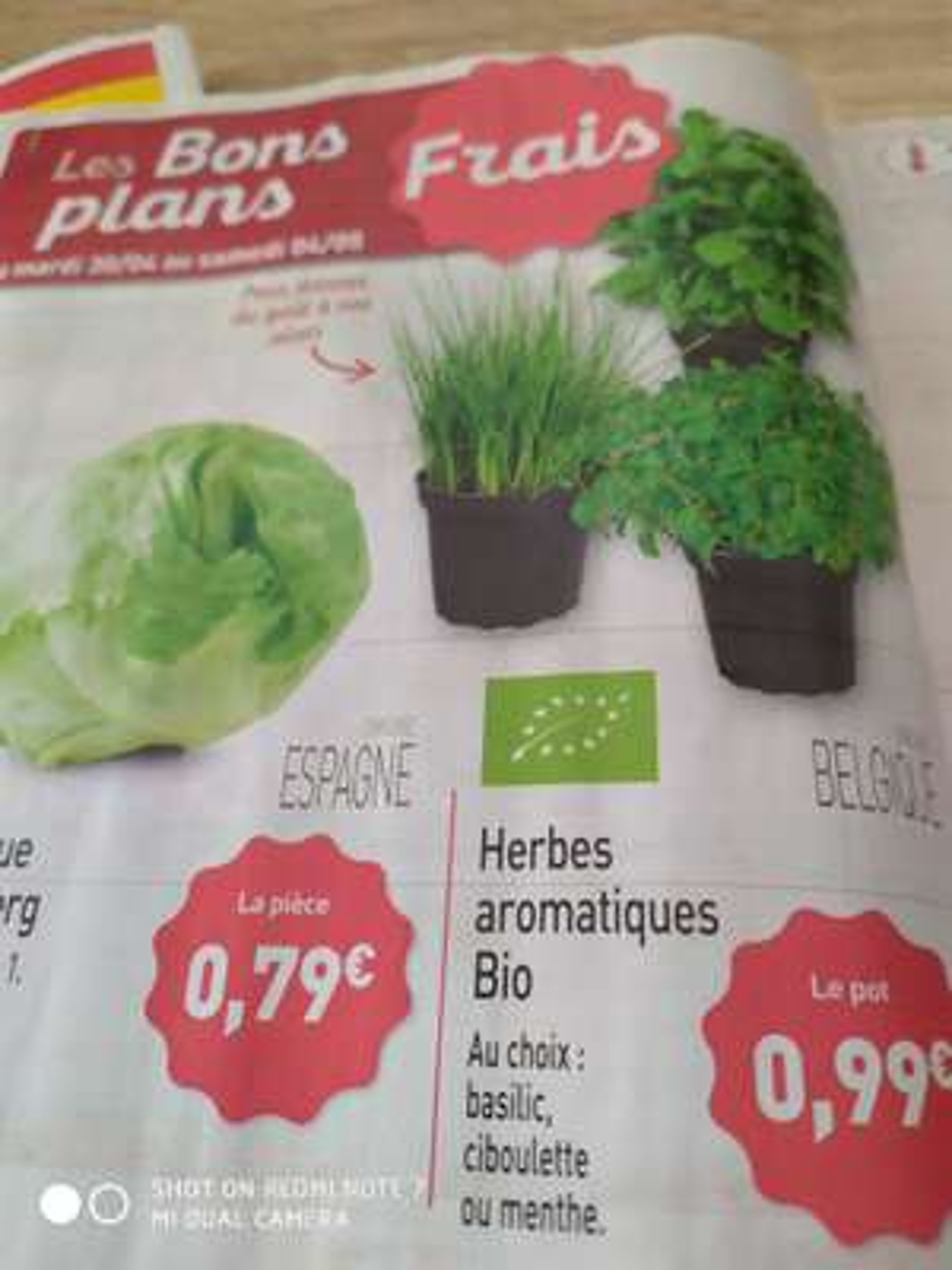 Pot d'herbes aromatiques Bio (Basilic, ciboulette ou menthe)