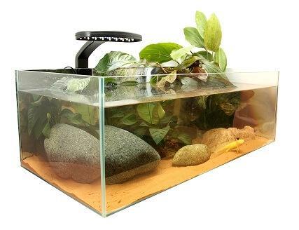 Kit aquarium complet pour axolotl