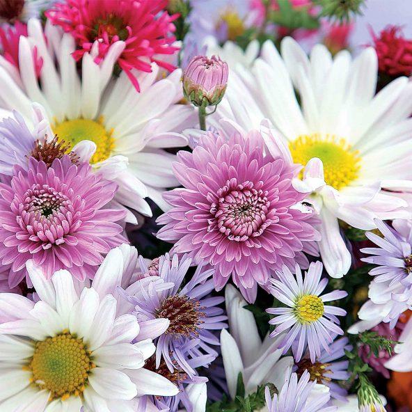 Sélection de bouquets et compositions florales - Ex : Bouquet de 12 fleurs coupées