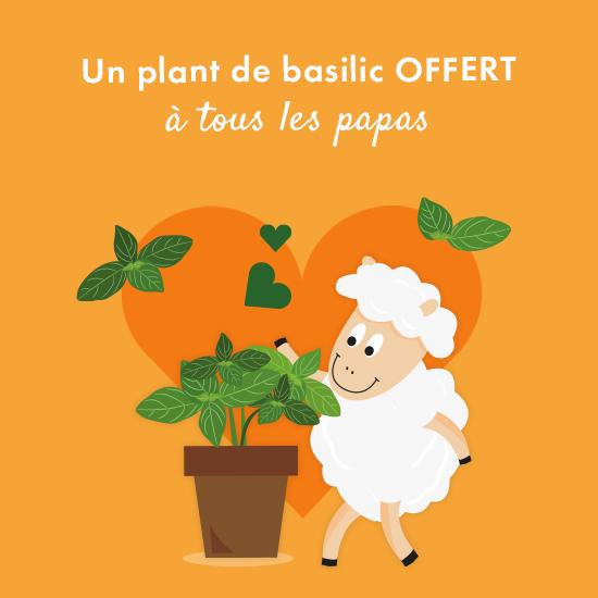Distribution Gratuite de Plants de Basilic Bio pour les Papas