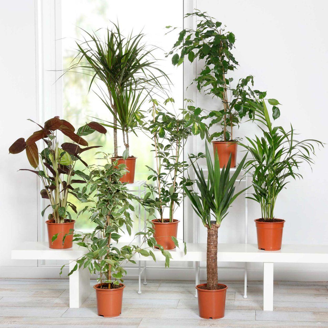 Plante verte (Variété au choix)
