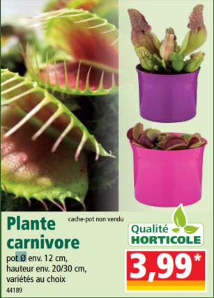 Plante carnivore (Variété au choix) - Ø 12 cm, hauteur 20/30 cm