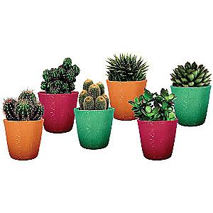 Cactus ou Succulente en Pot Céramique (Variétés au choix) - 30 cm