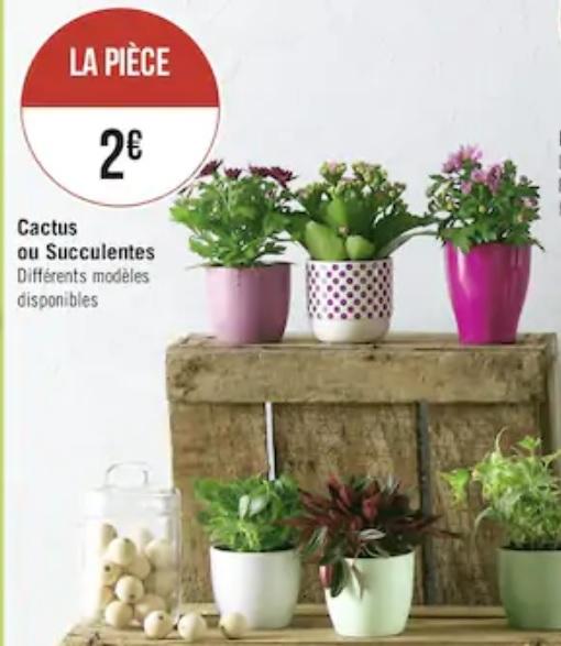Diverses plantes et compositions florales à petits prix - Ex : Pot de Cactus ou Succulentes