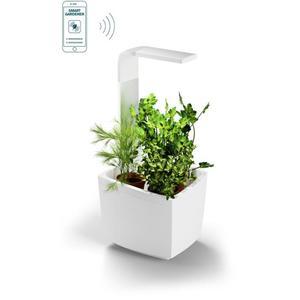 Potager connecté T3 TREGEN - Pour 3 aromates, petits légumes, fleurs avec application Smartphone - Blanc