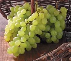 Raisin Blanc Italia Catégorie 1 - Le kg