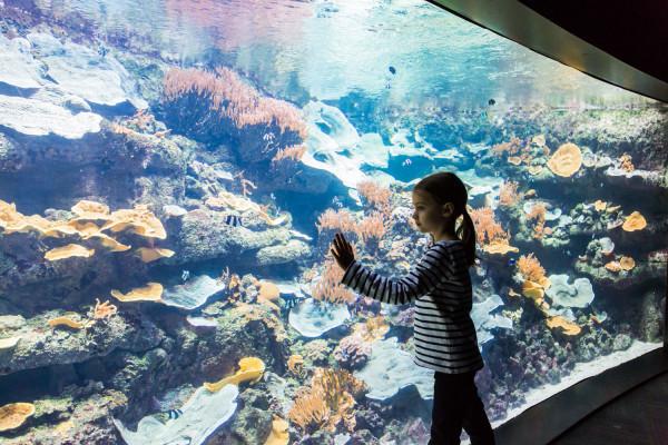Billet 2 Personnes pour l'Aquarium de Paris (75)