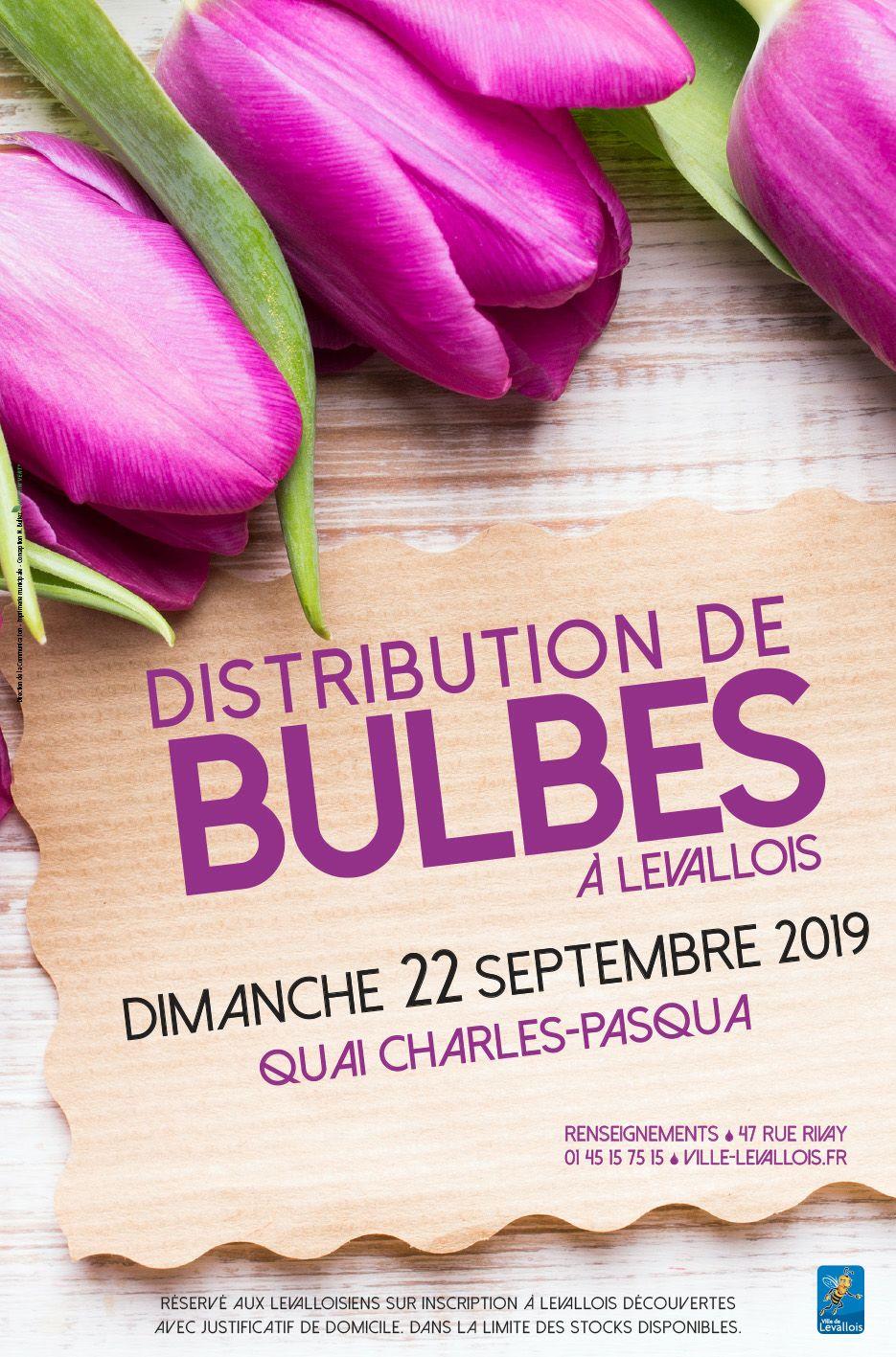 Distribution gratuite de Bulbes - Levallois-Perret (92)