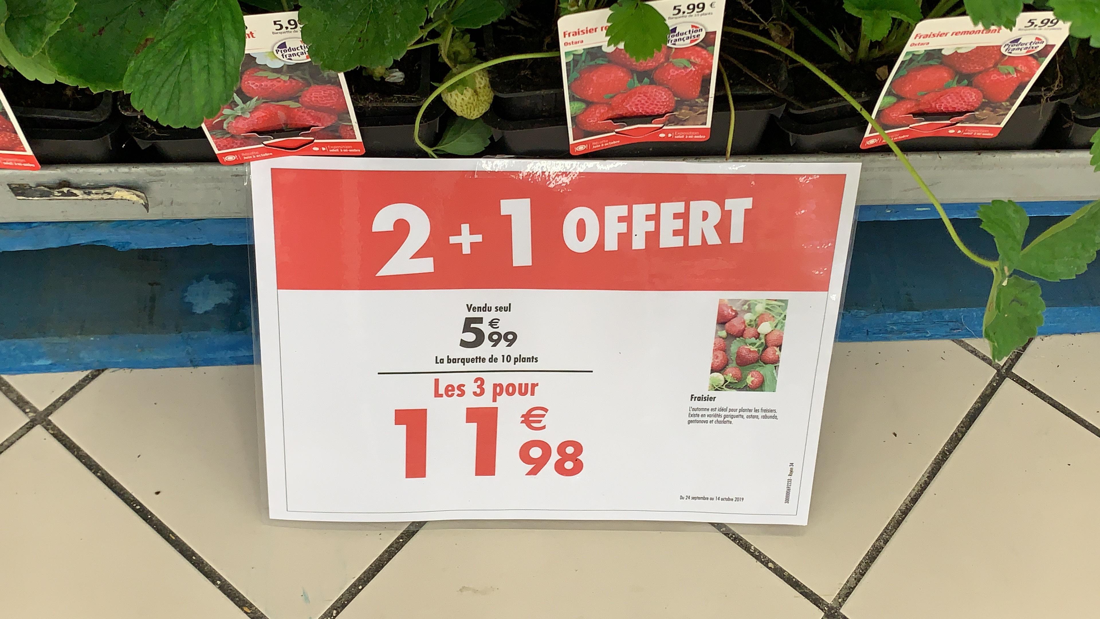 Lot de 30 plants de fraisiers Ostara (origine France) - Lieusaint (77)