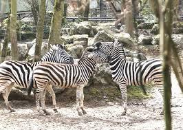 [Habitants de Maubeuge] Entrée & Visite Gratuite du Zoo de Maubeuge (59)