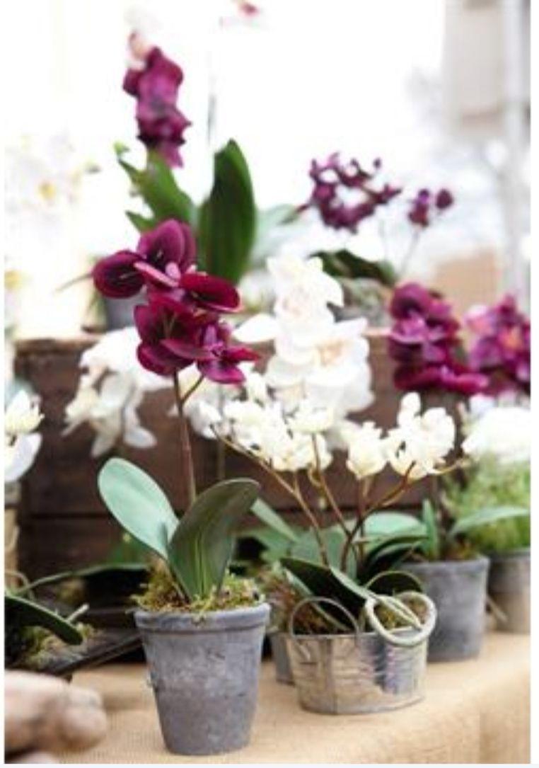 Sélection d'orchidées (ex : orchidée en pot brut 1 tige)