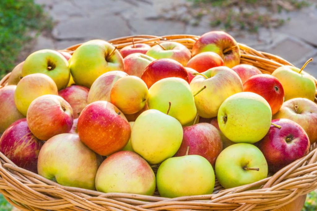Distribution Gratuite de Pommes Locales Issues de l'Agriculture Durable - Agen (47)