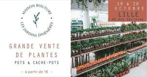 Vente de plantes à partir de 1€ au Jardin Éphémère de Maison Bouture - (Lille 59 / Tours 37 / Nice 06)