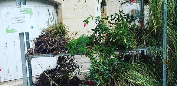 Distribution gratuite de plantes aux habitants - Choisy-le-Roi (94)