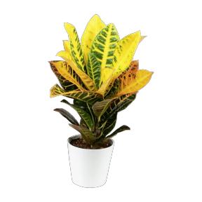 Plante verte avec pot en céramique - pot 12 cm, variété au choix