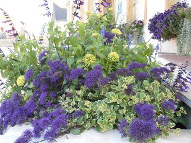 Distribution gratuite de plantes vivaces - Digoin (71)