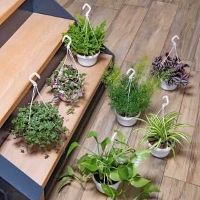 Plante d'automne ou plante verte en suspension - Variétés assorties, pot env. 14 cm.