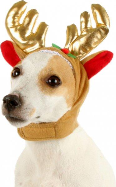 Déguisement de renne pour chien (zoomalia.com)