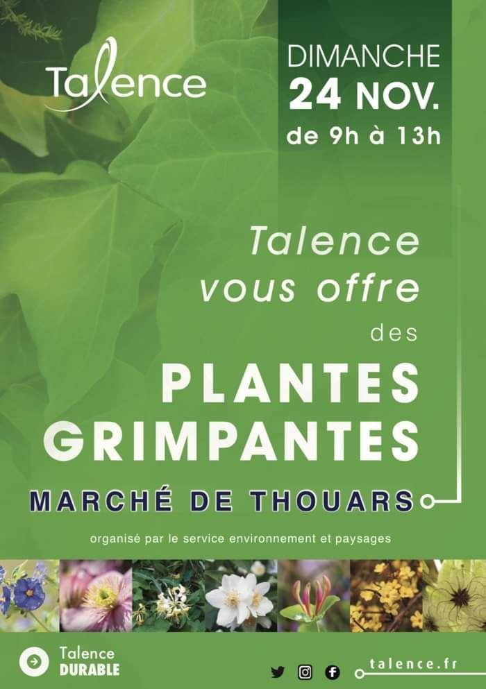 Distribution gratuite de plantes grimpantes au Marché de Thouars (33)