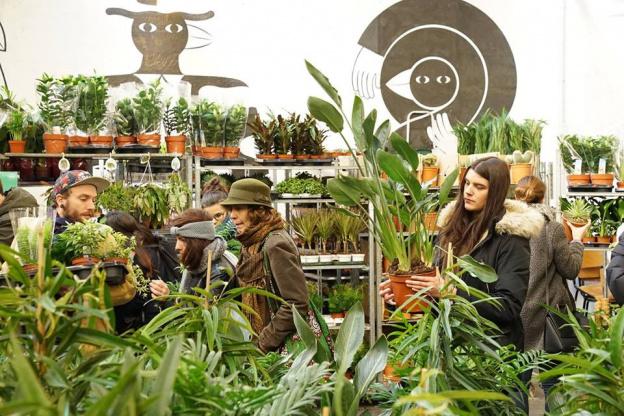 Sélection de plantes à partir de 2€ - Paris (75)