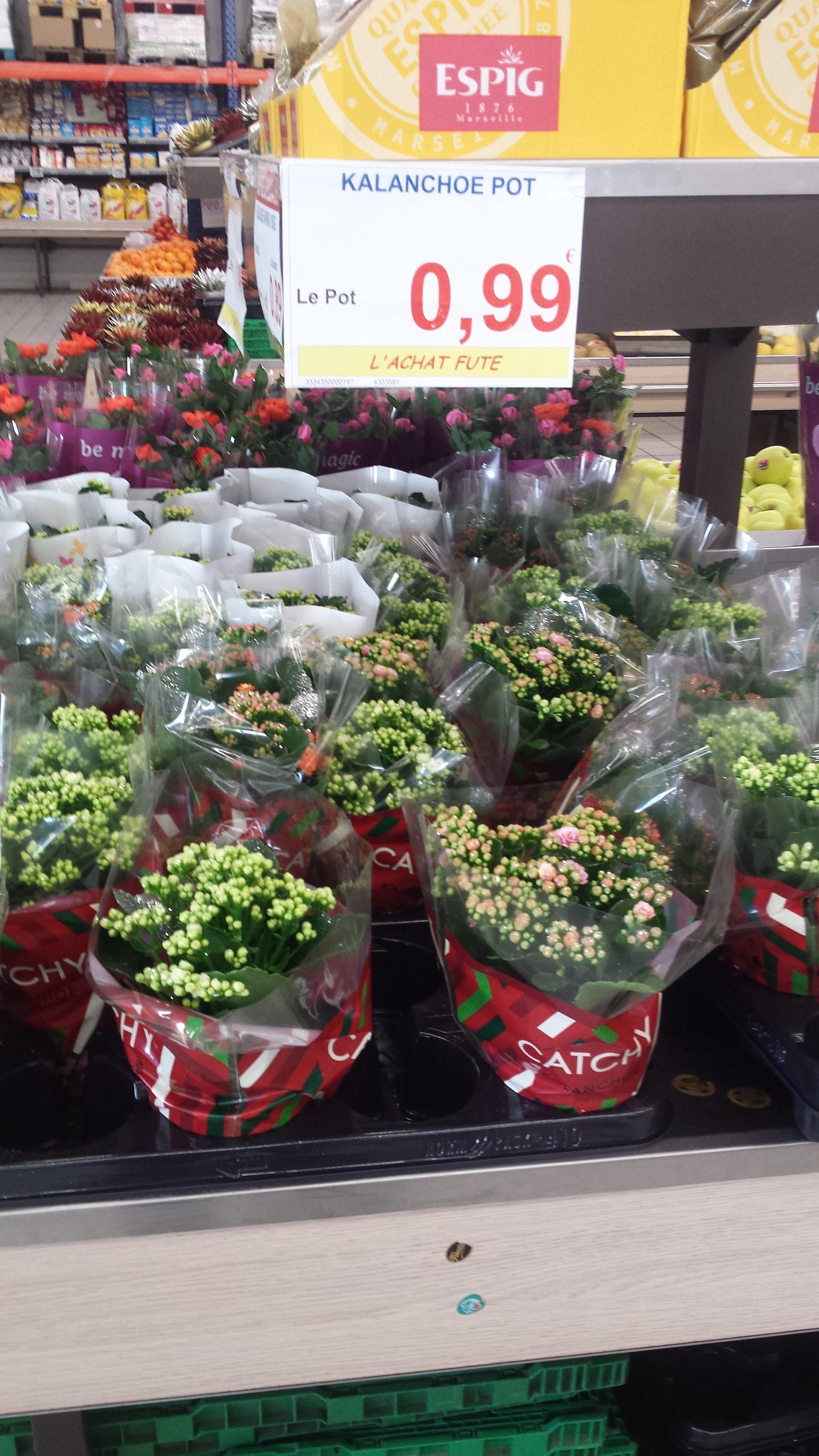Plante Kalanchoë - Goussainville (95)