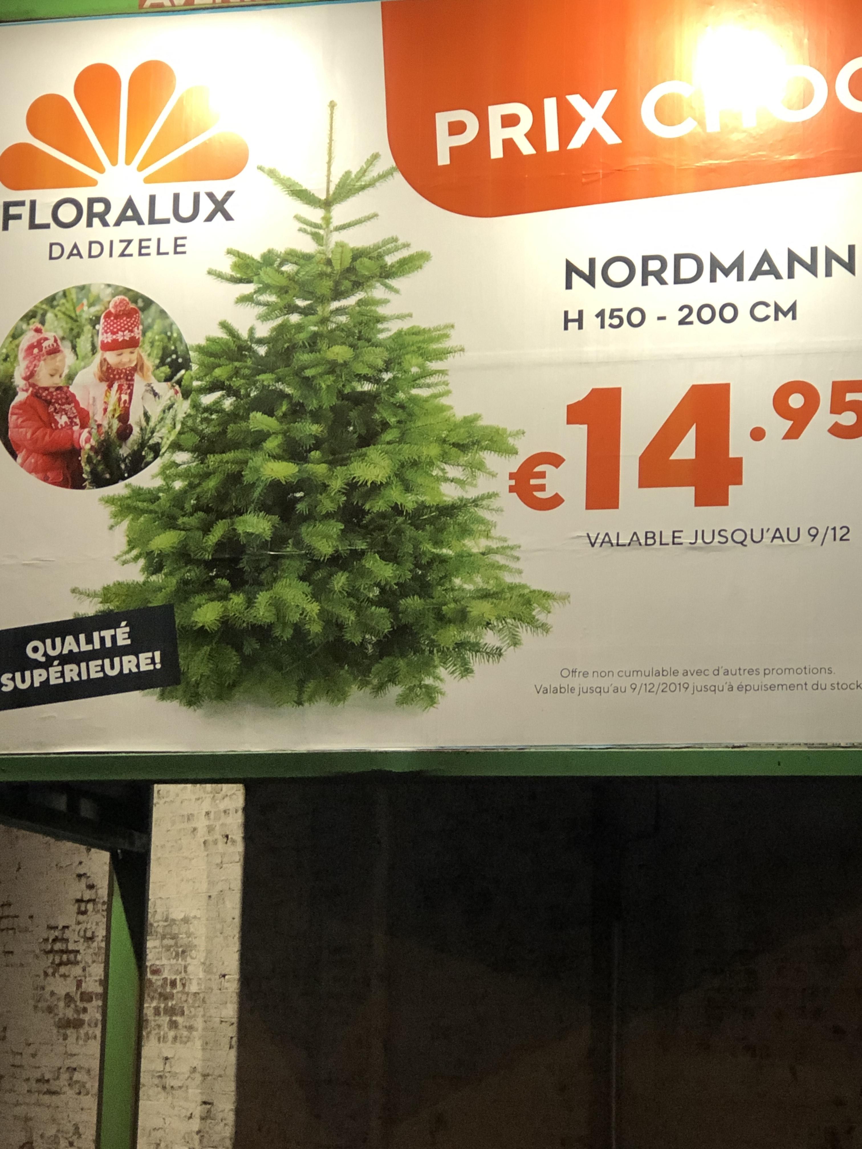 Sapin Nordmann (H150 - 200 cm) - Floralux Moorslede / Mouscron (Frontaliers Belgique)