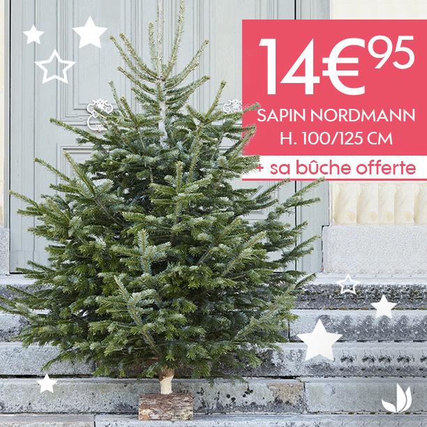 Sapin Nordmann + Bûche - 100/125 cm