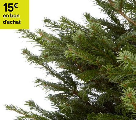 Sapin Naturel Nordmann coupé 120/150 cm (+15€ en bon d'achat)