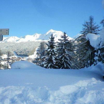 Sapin de Noël à couper Gratuit - La Plagne (73)