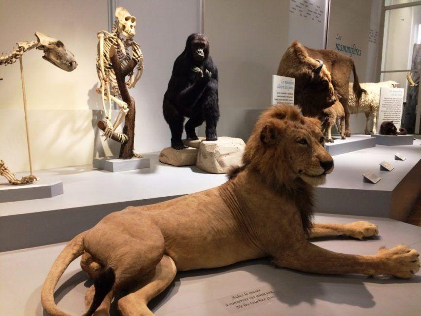 Entrée gratuite au musée d'Histoire naturelle pour la nuit du modèle à poils - Lille (59)