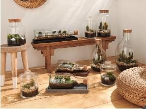 Terrarium en bouteille avec cactus ou succulentes - 48 cm à 29.99€ ou 58 cm à 34.99€