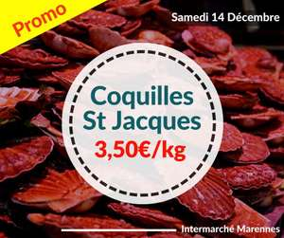 Coquilles Saint-Jacques entières (pêchées en Atlantique Nord-Est, le kg) - Marennes / Dolus d'oléron (17)